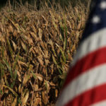 Corn yield potential averaged 173 bushels per acre (bpa) through 10 stops in the Iowa counties of Iowa, Poweshiek, Marshall, Tama, Grundy and Butler counties. That is down from last year's crop tour average in those areas of 193.55 bpa and the three-year tour average of 185.23 bpa. | File photo