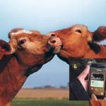 British cattle producers swipe right on new app