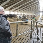 Neighbours milk cows in organic partnership
