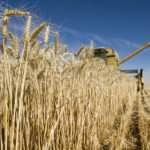 Statistics Canada ups crop production estimates