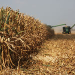 U.S. soybean, corn yields down, wheat stays the same