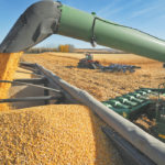 Statistics Canada forecasts near record corn crop