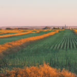 Slow harvest progress in Alberta: report