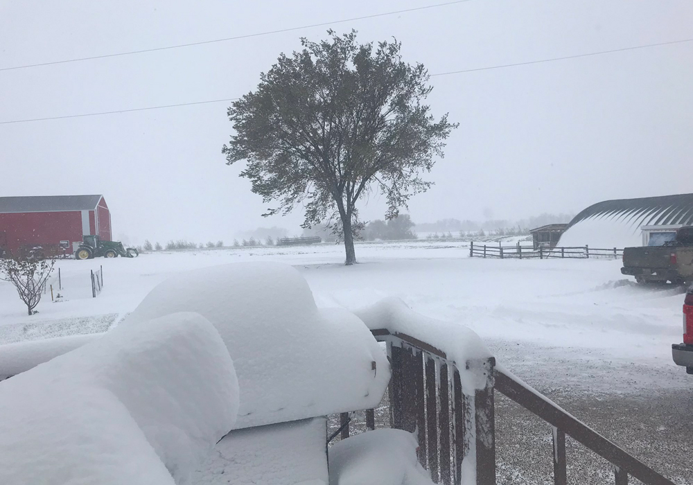 A massive snowstorm, just before the Thanksgiving weekend, dumped 15 to 40 centimetres of snow on the south-central region of the province. | Twitter/@farmergirl591 photo