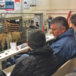Conservative MP James Bezan takes in a cattle auction while campaigning for re-election in the Manitoba riding of Selkirk-Interlake-Eastman.  |  Karen Briere photo