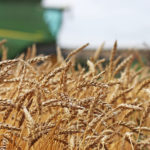 Western Canadian wheat: Good gains for red spring, durum eases
