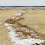 For the week ended Nov. 5, approximately 88.0 percent of all Alberta crops were in the bin. That's up from 80.9 percent the previous week. Of the remaining crops, slightly more than half were swathed with the rest still standing. | File photo