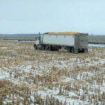 Prolonged Prairie harvest pushes up feed grain prices