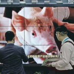 Reopening of China's pork is no boom