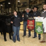 The Canadian Western Agribition grand champion Simmental female was the entry of the Massey family of Strathmore, Alta. Named JM New Trend Class Act 3E, the two year old had a heifer calf at side. | Barbara Duckworth photo