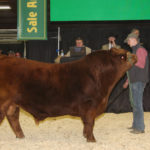 Greenwood Limousin and Angus of Lloydminster, Sask. sold a half semen interest and full possession in Greenwood Electric Impact WET. This Limousin bull was supreme champion at Farmfair International and grand champion Limousin bull at Canadian Western Agribition. He is a son of the 2017 Agribition supreme champion Greenwood Canadian Impact ET and sold for $62,000 to Ben Armitage, Kinsella, Alta. | Barbara Duckworth photo