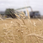 New crop mission tells durum's story