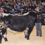 Sask. Speckle Park bull named world champ