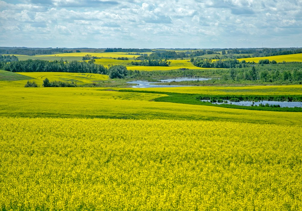 Hydrogenation-derived renewable diesel (HDRD) is starting to make inroads in the fuel sector.