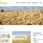 Halstead to chair SaskWheat
