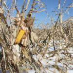 Carbon tax cost on Man. corn drying pegged at $2 million