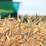 Wheat groups fund breeding