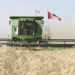 Ag Canada forecasts larger wheat crop, smaller canola in 2020/21