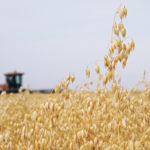 Expected increase in oat acres could see drop in prices