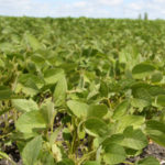 Frequently ignored Paraguay grows its fair share of soybeans