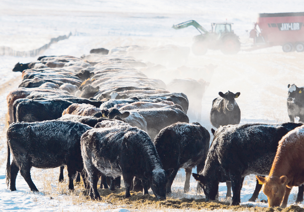 The process verification program is one tool American beef producers are considering as a way to introduce voluntary labelling.  |  Mike Sturk photo