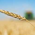 Western Canadian wheat: Prairie prices mostly weaker on U.S. declines