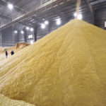 New distillers grains introduced to feed market
