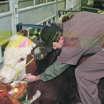 Vet shortage hits critical level