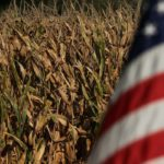 U.S. farmers plan huge corn crop despite price drop, ethanol collapse