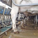 Dairy farmers dump milk over demand issues