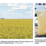 Nuseed ratchets up canola seed competition