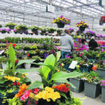New COVID behaviour hikes greenhouse sales