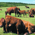 U.S. cattle states eye potential drought