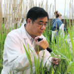 Gene discovery brings FHB resistance to cereals