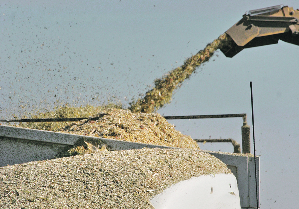 Corn silage has the potential to have higher energy and better feed conversion, but researchers say it takes more management than barley.  |  File photo