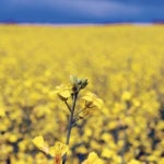 Veg oil rally gives canola much welcomed momentum