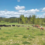 B.C. ranchers declared sustainability winners