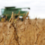 Soybean yields recover in Manitoba