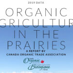 Organic grain production hits a plateau