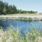 Wetland regulations bog down Manitoba farmers