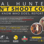 Intentional livestock shootings in Sask. prompt reward