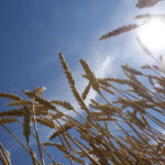 North American farmers warned to prepare for long dry spell