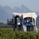 Blueberry sector faces retaliation