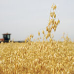 Banner year for Canadian oat exports