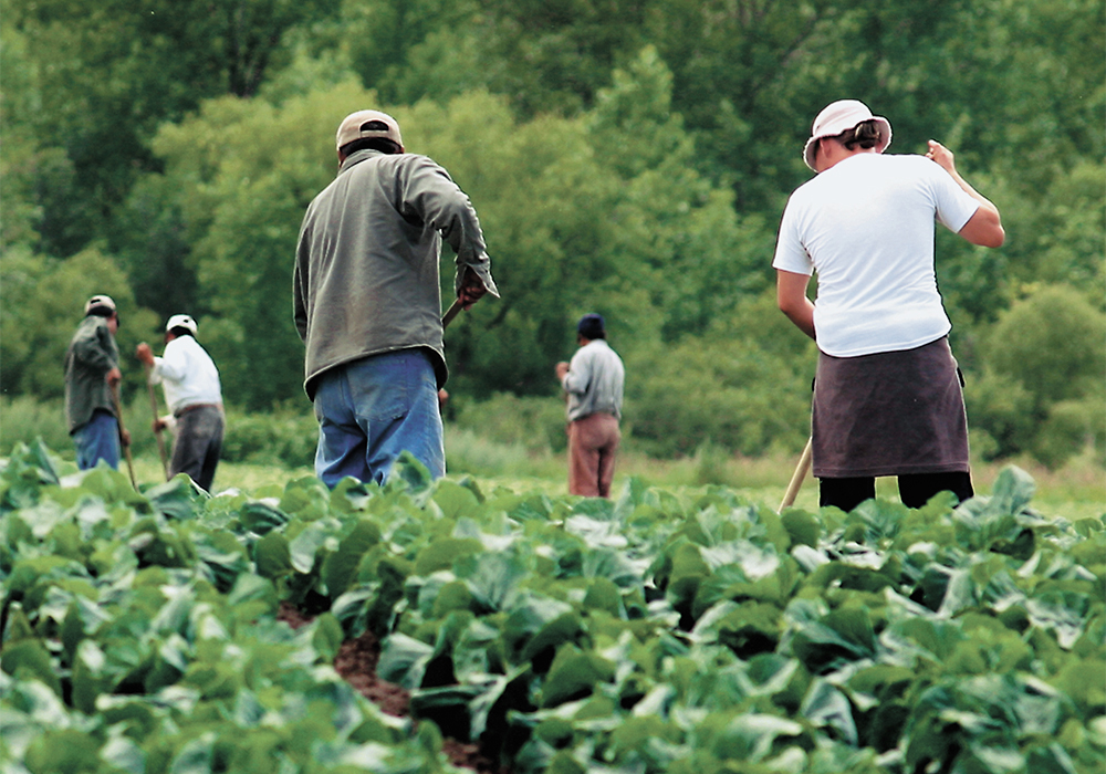 Producers continue to raise concerns over recently announced travel restrictions, despite assurances from Ottawa the changes won't affect the flow of international labour needed on farms and in processing facilities. | File photo