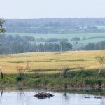 Average farmland values rose by six percent in Alberta last year, 5.4 percent in Saskatchewan and 3.6 percent in Manitoba, Farm Credit Canada said in its 2020 Farmland Values Report, released March 15. | File photo