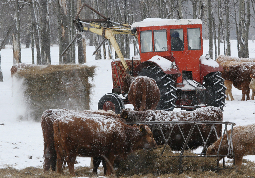 """We need to have tools that help us better manage the risks of weather, trade and production,"" said Bob Lowe, president of the Canadian Cattlemen's Association. 