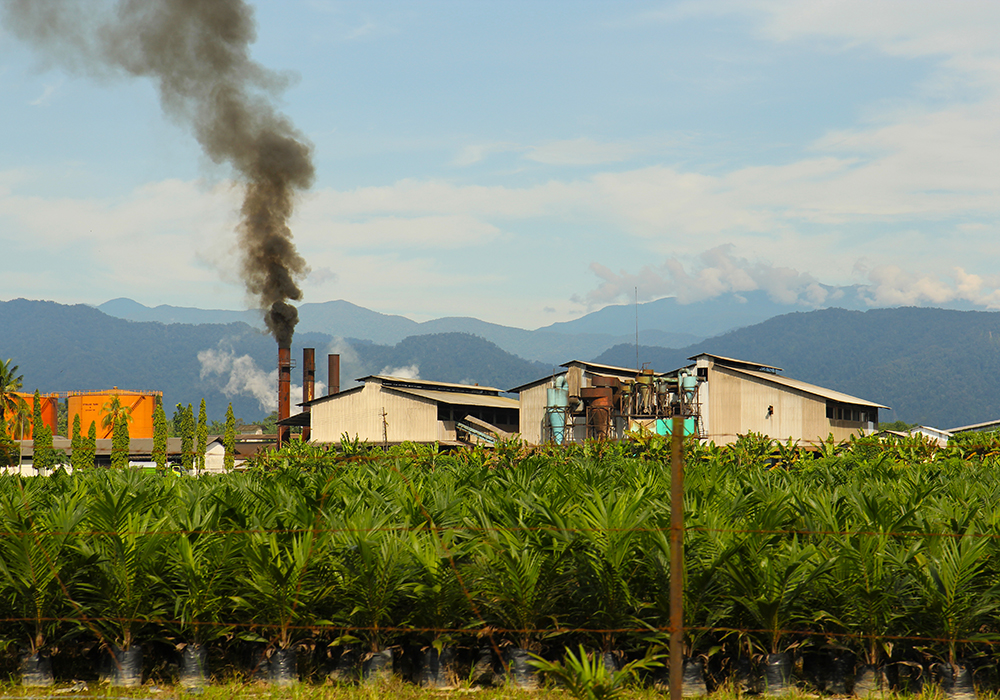 An analyst hopes higher Indonesian production and exports will help alleviate vegetable oil supplies that are too tight. | Getty Images