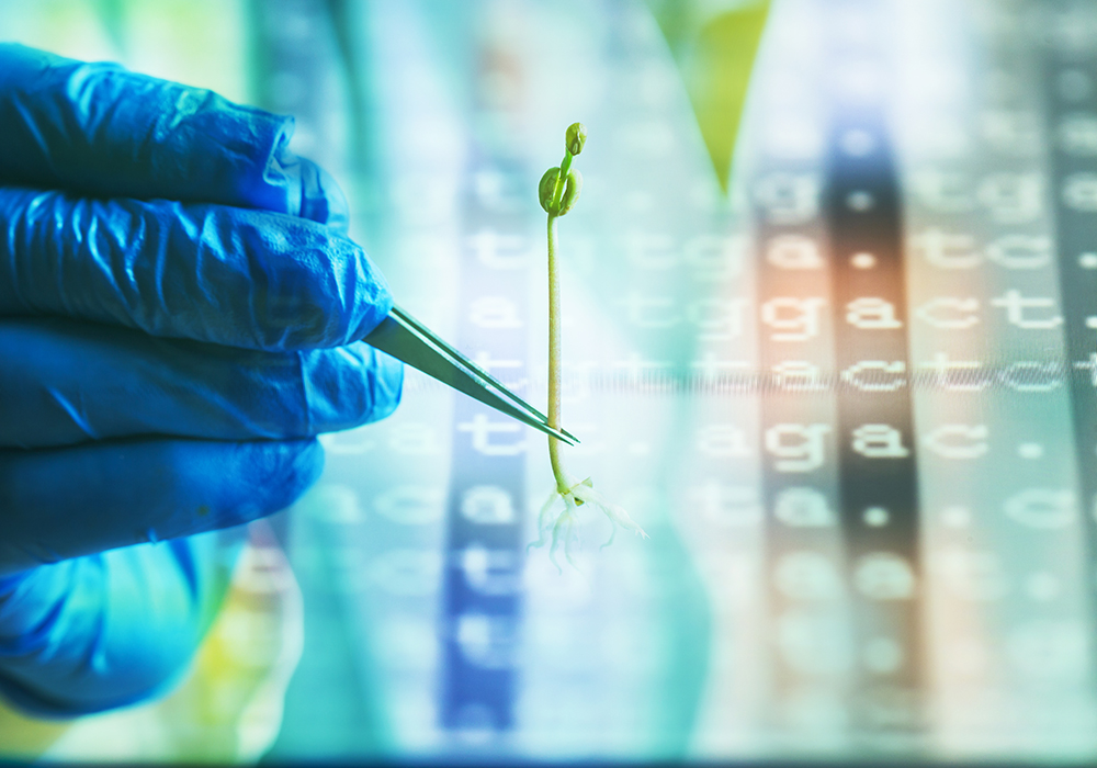 To develop the new guidelines, Health Canada experts reviewed the science around gene-edited crops and concluded that the technology is safe for human consumption and the environment. | Getty Images