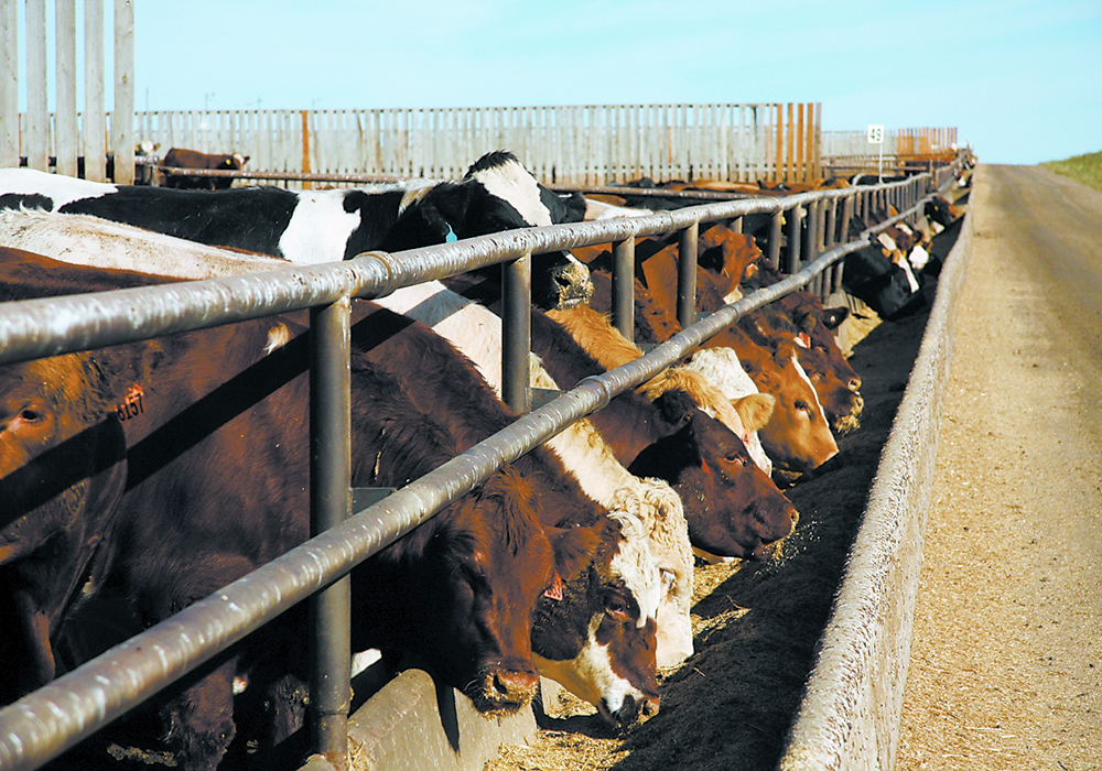 Processors and retailers had a profitable year but consumers paid more and feedlots lost millions. | File photo
